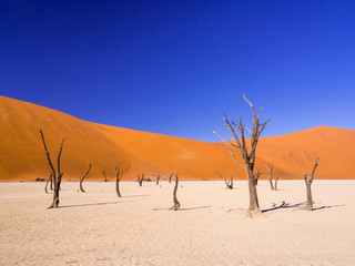 Deurstickers Droogte Dead Camelthorn Trees in Dead Vlei, Namibia
