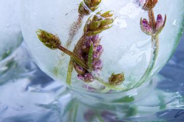 Lavendel in kristallklarem EIs