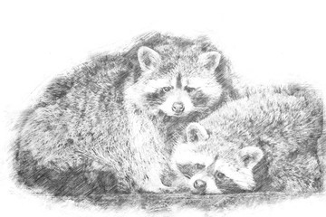 Sketch - A couple of racoons looking into the camera