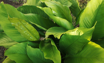 Organic textures - Tropical Green Leafs