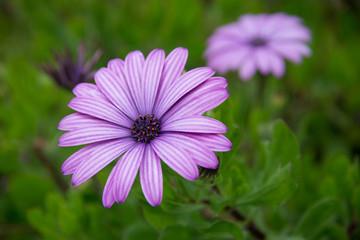 Flower with Purple Petals