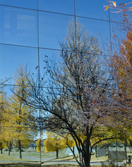Fall Colors Reflected in Glass Office Building