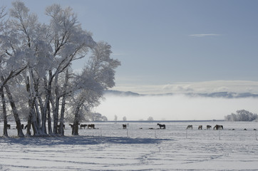 Snowy Morning in a Horse Pasture