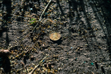 Coin of Ukrainian currency Hryvna on the soil in the summer sunset light.