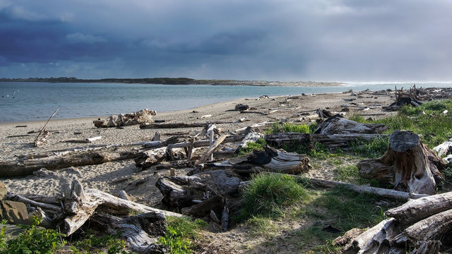 Landscape of an Oregon beach in Lincoln City, featuring logs washed out on the beach and a cloudy sky