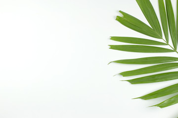 Green palm leaves on white background. top view.