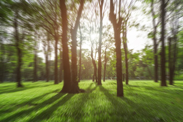Green trees during the morning sunrise in the park.