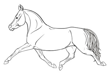 Page coloring with equestrian sport.