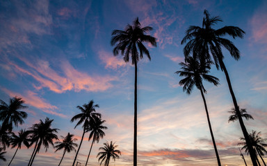 Silhouette of coconut tree during sunrise in Thailand