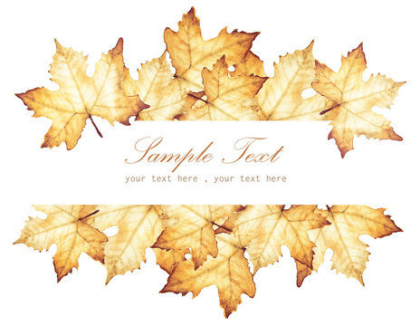 Watercolor painting of Autumn with place for text - maple leaves drawing.