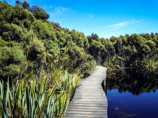 Lake Wilkie in the Catlins, Rainforest in New Zealand