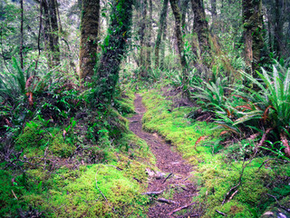 Idyllic mossy footpath in the Catlins, New Zealand