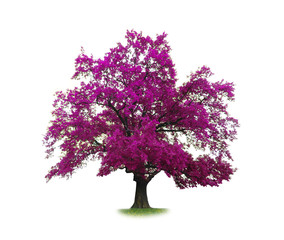 concept of purple tree isolated on white background