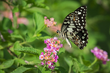 Beautiful butterfly perched on a flower. Insect Animals.