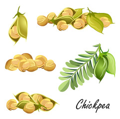 Chickpeas  (plant, pods, peas). Set of hand drawn vector sketches on white background.