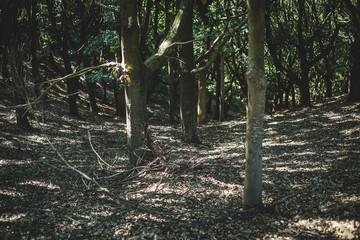 Woods over Nara