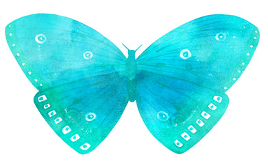 Large vibrant turquoise butterfly on white background