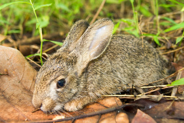 Little rabbit sleeping in a grass forest.