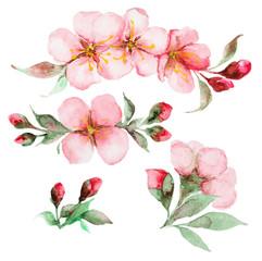 watercolor sakura flowers