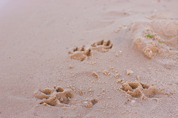 dog prints on sand perspective