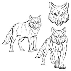 Wolf set. Vector sketch of a wolf. Business sign logotype wolf face. Sketch of a tattoo wolf. Forest predatory beast dangerous wolf