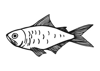 a fish. Vector vintage sketch