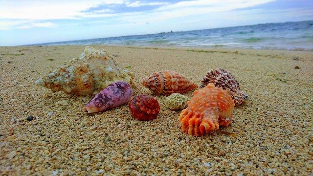 Vietnamese beach with beautiful sea shells