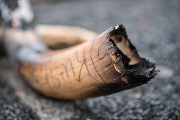 An elephant tusk lays charred as part of the world's largest-ever ivory burn, Kenya 2016