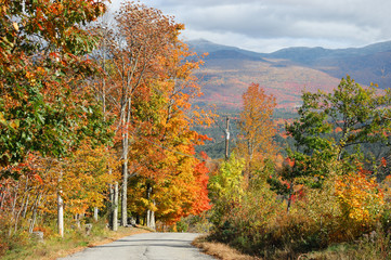 colorful autumn forest and country road in the mountain