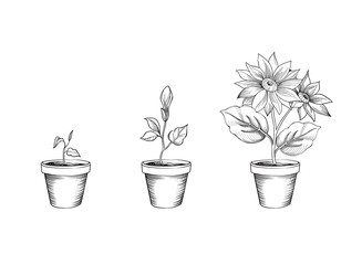 Flower growth set. Floral pot. Plant bloom stages