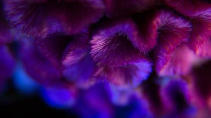 Macro flower in the shape of heart - Celosia