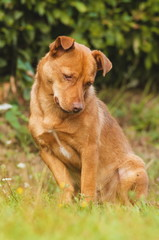 Cute brown dog outdoor