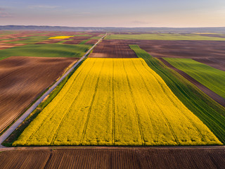 Aerial shot of canola, rape seed from a drone. Beautiful agricultural landscape.