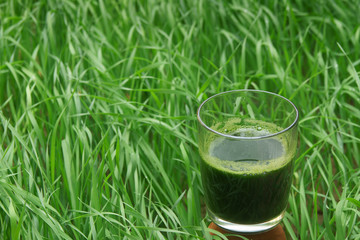 Glass of wheatgrass juice on a wheat field.