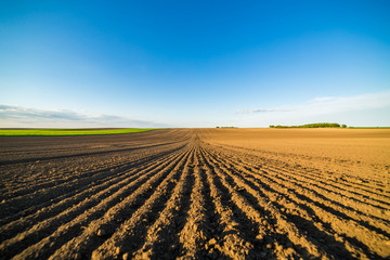Agricultural landscape, arable crop field. Arable land is the land under temporary agricultural crops capable of being ploughed and used to grow crops. Wall mural