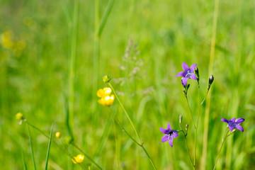 wildflowers in meadow selective focus