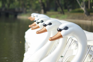 Duck Pedal boats.
