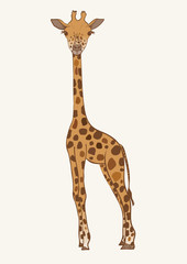 Hand drawn colored vector giraffe.