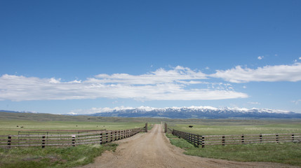 A fenced pasture with grass and cows bisected by a gravel road that leads to the rugged mountains in the distance. White clouds in blue sky above.
