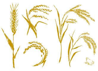 麦と米 セット