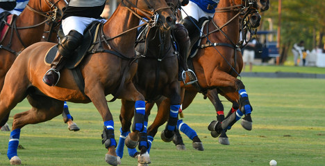 Horses and polo players In match