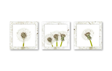 Three modern frames  with floral design pictures, interior decor wallpaper mockup