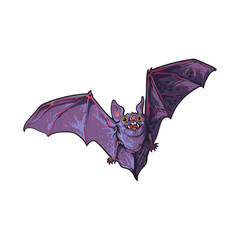 Scary flying Halloween vampire bat, sketch style vector illustration isolated on white background. Hand drawn, sketch style vampire bat flying with wide spread wings, Halloween object