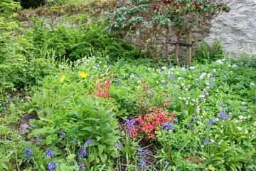 CloseUp on the Wildflower Garden