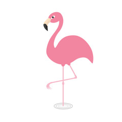Pink flamingo standing on one leg. Circles on the water. Exotic tropical bird. Zoo animal collection. Cute cartoon character. Decoration element. Flat design. White background. Isolated.