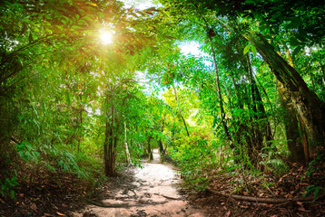 Jungle forest nature background