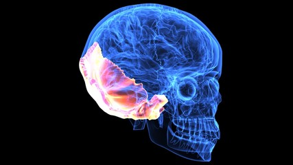 3d illustration human body brain and skeleton anatomy