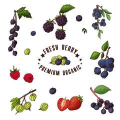 Hand drawn illustration of currant, razz, blueberry, stawberry, gooseberry, blackberry, elderberry, huckleberry Set og fruits