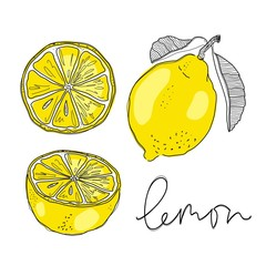Hand draw of lemon. Vector illustration.