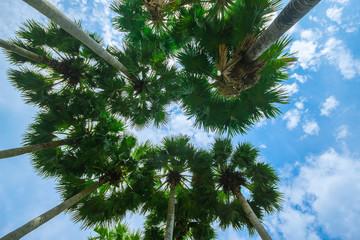 Palm trees on the beach .